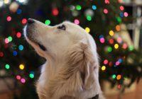 Čím potěšit chlupaté členy rodiny pod vánočním stromečkem?